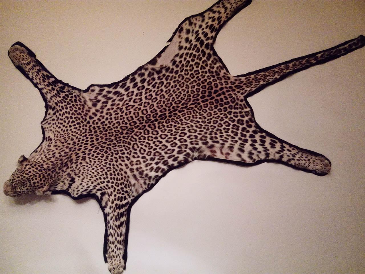 Hunter's Cove Room - leopard skin.