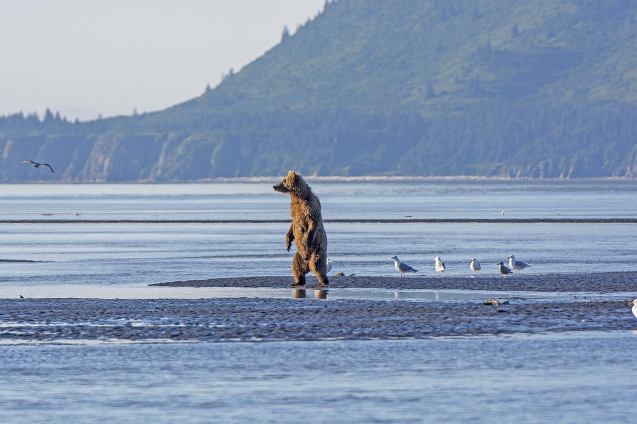 Bear standing on a beach.