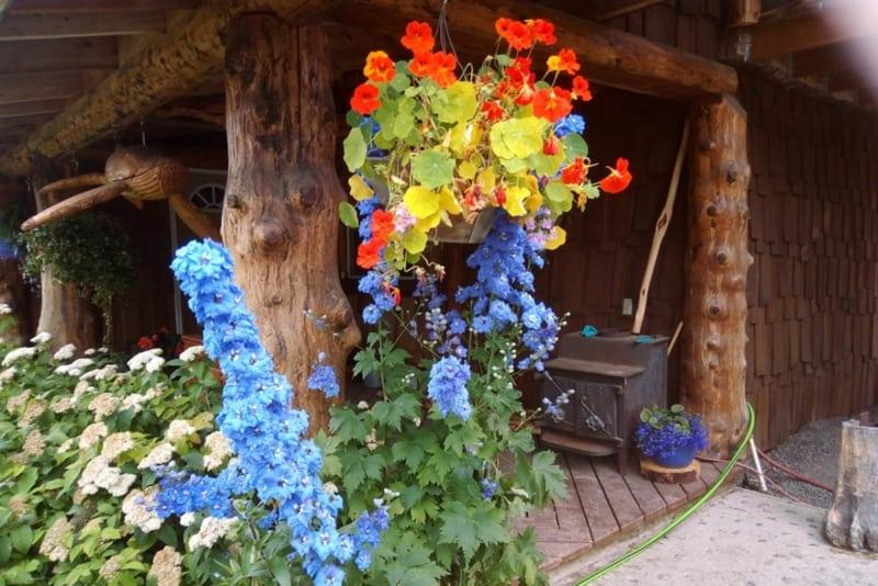 Decorative patio flowers.